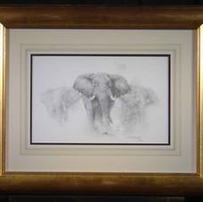 Elephants; pencil