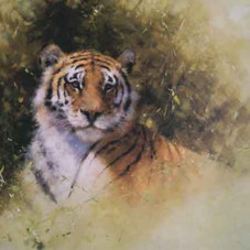 Working sketch for the painting of a Tiger