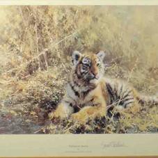 Teenage Tiger