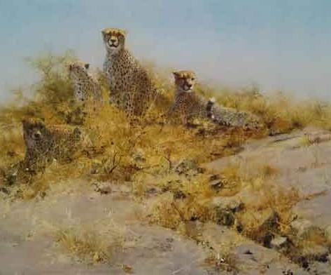 Cheetahs of Namibia