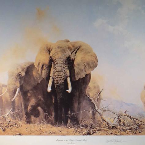 Elephants at Tsavo National Park