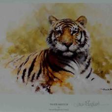 Tiger sketch 1986