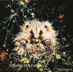 davidshepherd-hedgehog.jpg