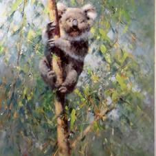 davidshepherd-koala-large.jpg