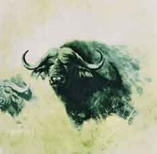 Buffalo (Big Five Collection)