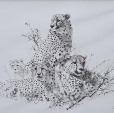 Cheetahs, pencil drawing 1999