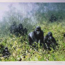 davidshepherd-inthemistsofrwanda-large.j