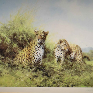 Leopards - Silkscreen