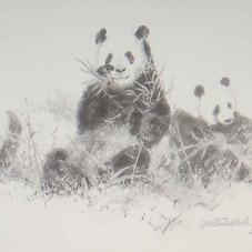 davidshepherd-pandas2001-large.jpg