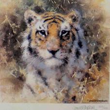 Bengal Tiger (Cameo)