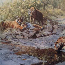 Tigers of Bandhagarh