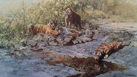 davidshepherd-tigersofbandhavgarh_edited