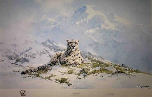 davidshepherd-snowleopard-creased-large.