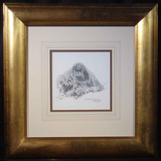 davidshepherd-orang-utan-pencil-framed.j