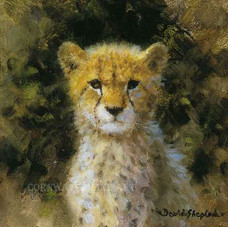 Cheetah cub cameo