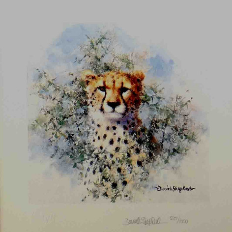 Cheetah cameo
