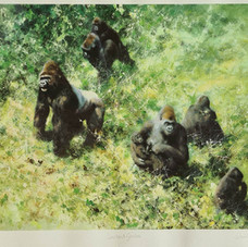 davidshepherd-lowlandgorillas-framed-lar