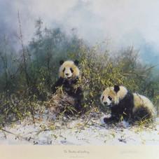 davidshepherd-pandasofwolong-large.jpg