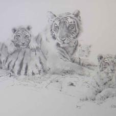 Tiger and Cubs pencil sketch