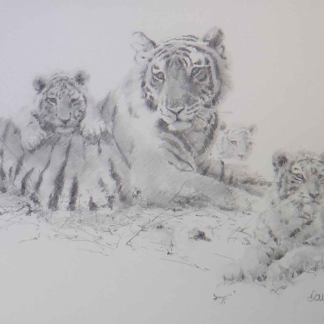 Tiger and Cubs pencil sketch