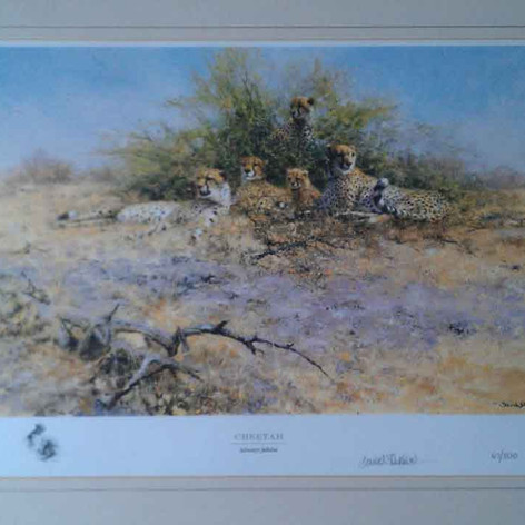Cheetah - Sappi collection