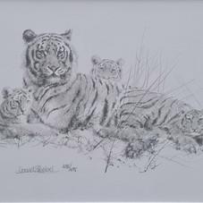 Tigers pencil sketch