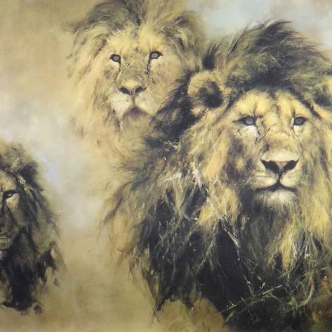 Lion Majesty