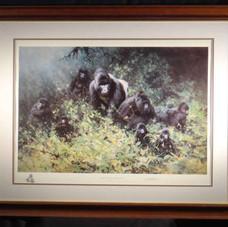 mountaingorillas-wood.jpg