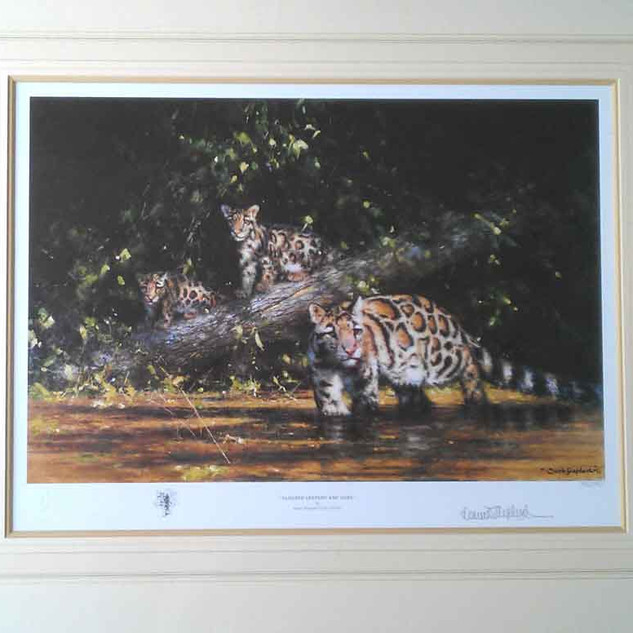 Clouded Leopard and Cubs