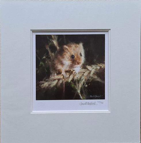 davidshepherd-harvestmouse-mounted.jpg