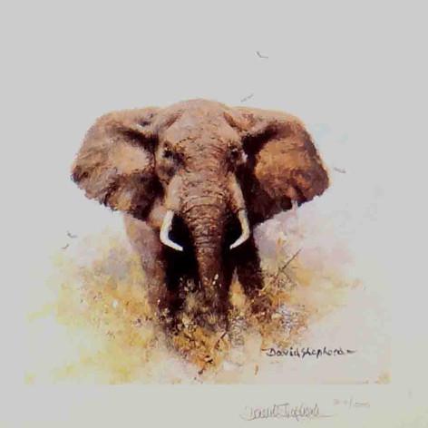 Elephant (Cameo)