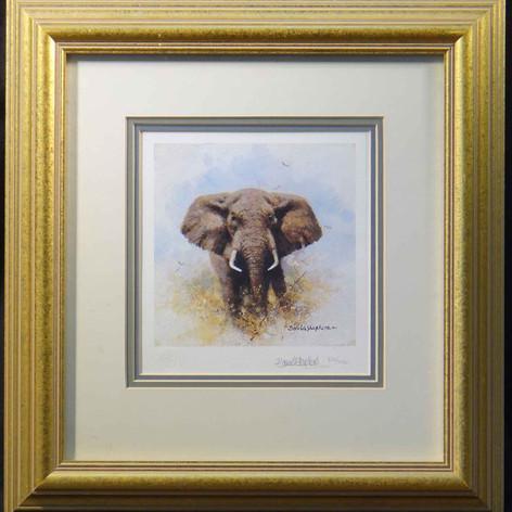 Elephant Cameo