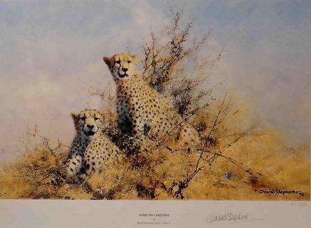 davidshepherd-africancheetah-large.jpg