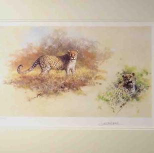 Leopards Sketch