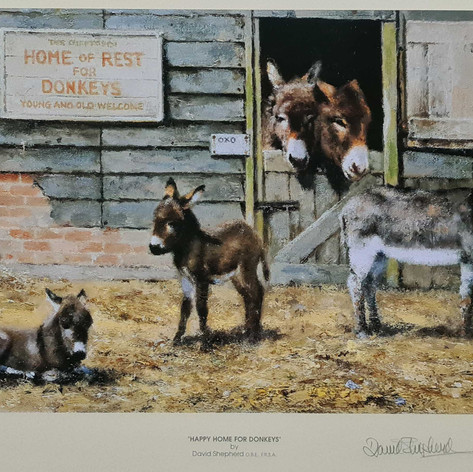 Happy Home For Donkeys