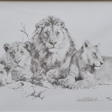 Lions drawing, 2000