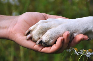 pet-funeral-hand paw.jpg