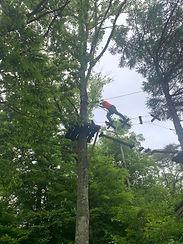アミーチアドベンチャー軽井沢 樹上のアスレチック ツリートレッキング 上