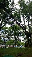 ツリートレッキング 軽井沢 初級 自然 アスレチック