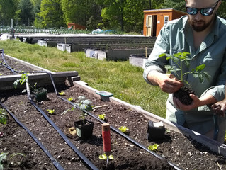 Charles River Center and Needham Community Farm's Growing Collaboration