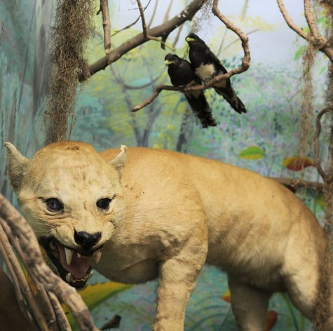 Pq Museu-de-História-Natural-3-1024x683.