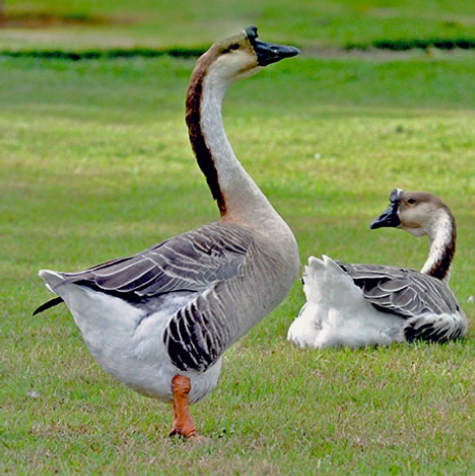 Aves do Mundo 2.png