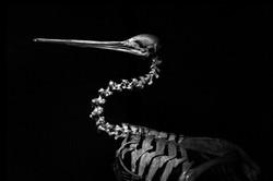 AnatomyReport_Bird7_9351