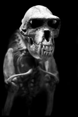 AnatomyReport_Predator2_1184