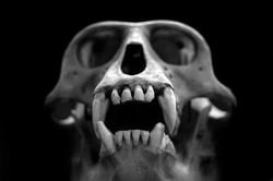 AnatomyReport_Monkey2_1175