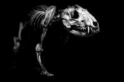 AnatomyReport_Predator3_9361