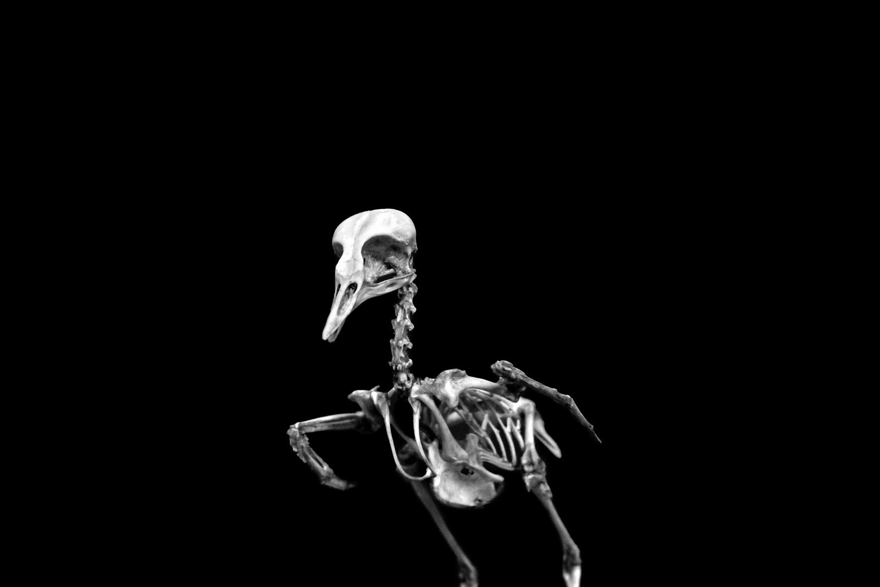 AnatomyReport_Bird5_1157