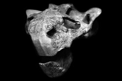 AnatomyReport_Dinosaurus2_6685