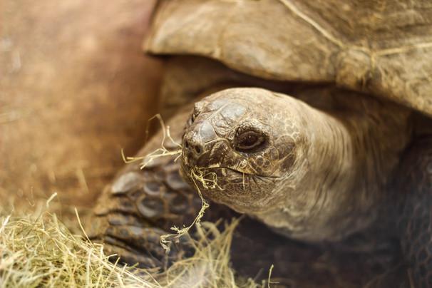Nature Photography, Bristol Zoo.