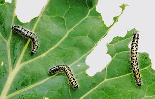 Pest-Management-Lawn-Care-NJ.webp